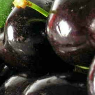 Black Cherry Explosion Wax Melts