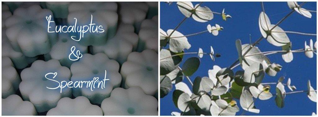 New Fragrances Eucalyptus and Spearmint