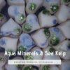 Aqua minerals and sea kelp